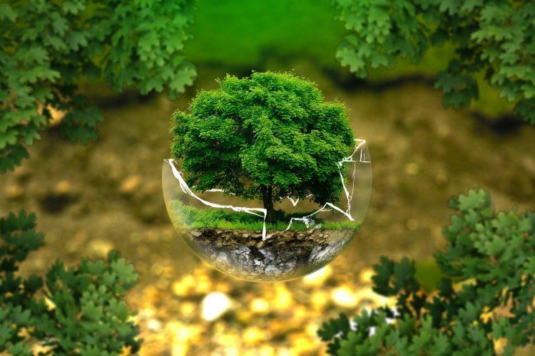 certificado_de_aptidao_ambiental